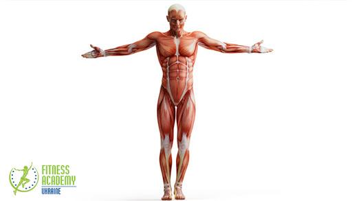 Академия Фитнеса - Украина Мышечное тестирование